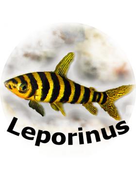 ГАНТЕЛИ ДЛЯ АКВААЭРОБИКИ с 3 блинами, Leporinus M